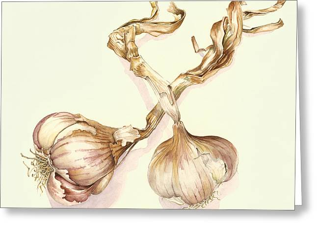Garlic Bulbs Greeting Card by Alison Cooper