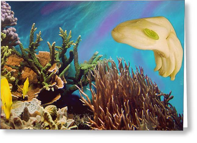 Marine Mollusc Digital Art Greeting Cards - Garlicuttlefish Greeting Card by Alex Matthews