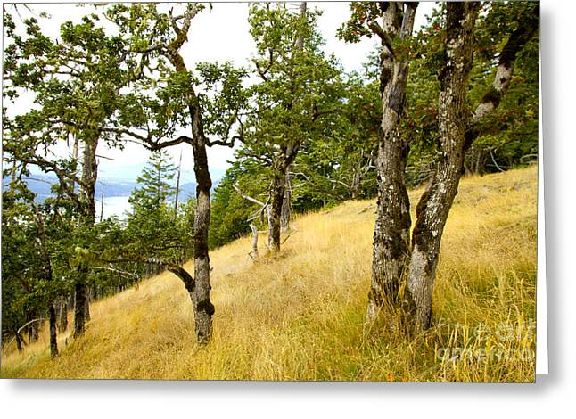 Prospects Greeting Cards - Gary oak Forest Greeting Card by Graham Foulkes
