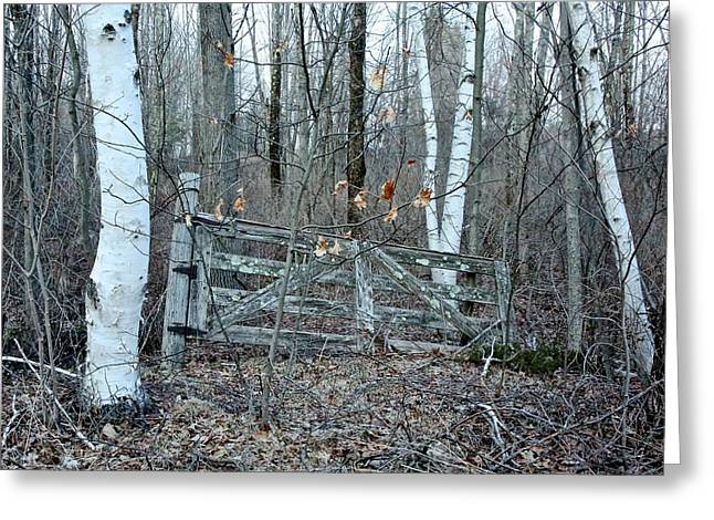 Randi Shenkman Greeting Cards - Gate and Birches Greeting Card by Randi Shenkman
