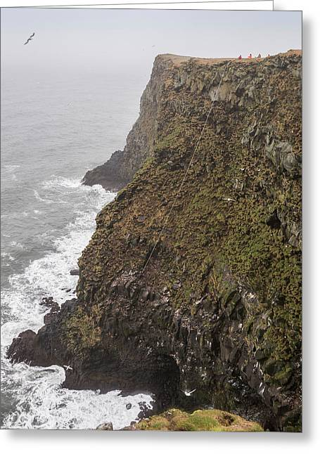 Gathering Photographs Greeting Cards - Gathering Guillemot Eggs On Cliffs Greeting Card by Panoramic Images