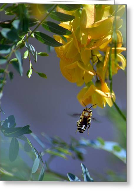 Flowers Against The Sky Greeting Cards - Gathering Nectar Greeting Card by Renee Barnes