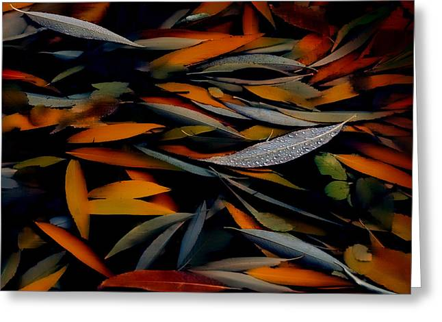 Deep Feelings Greeting Cards - Gathering Of Autumn  Greeting Card by Steven Milner