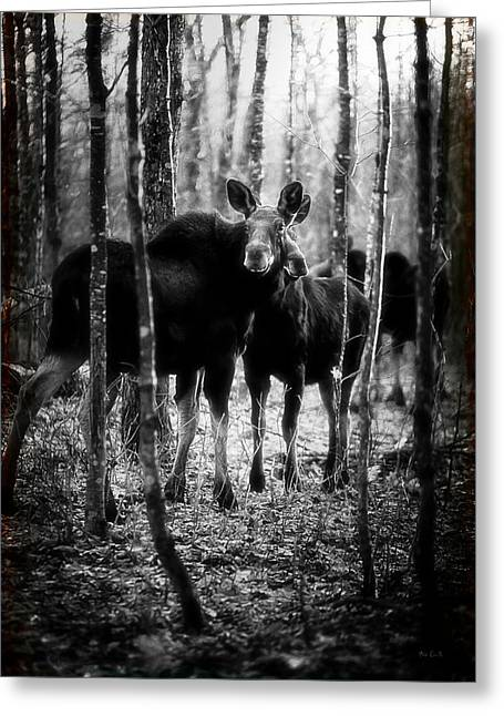 Hunting Cabin Photographs Greeting Cards - Gathering of Moose Greeting Card by Bob Orsillo