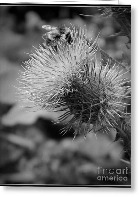 Neurotic Images Photography Greeting Cards - Gathering Pollen BW Greeting Card by Chalet Roome-Rigdon