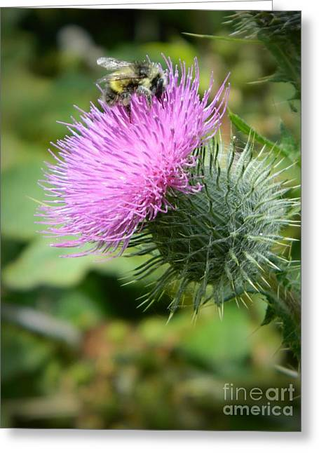 Gathering Greeting Cards - Gathering Pollen Greeting Card by Chalet Roome-Rigdon