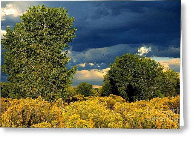 Gathering Greeting Cards - Gathering Storm Greeting Card by Bob Hislop