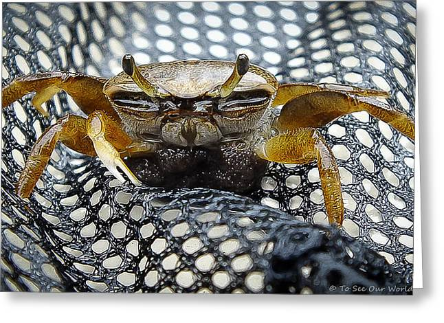 """""""crab Nets"""" Greeting Cards - Gathering Greeting Card by To See Our World Photography"""