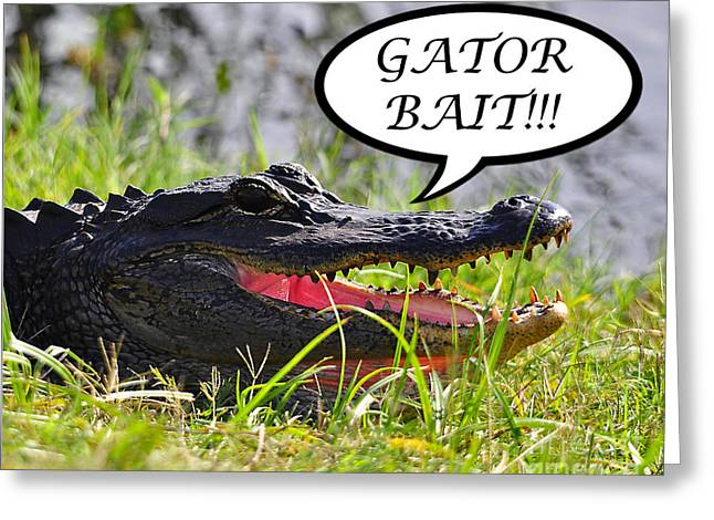 Gator Bait Greeting Card Greeting Card by Al Powell Photography USA