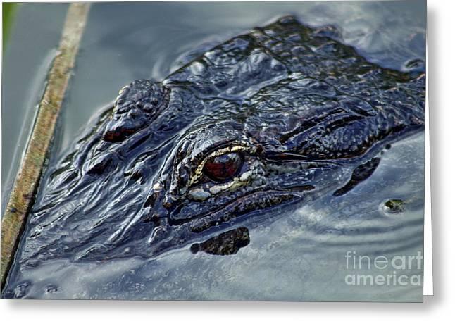 Florida Gators Greeting Cards - Gator Greeting Card by David Rucker