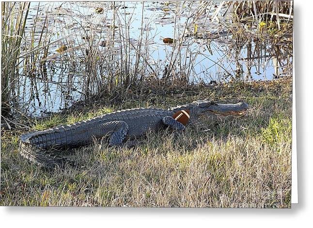 Outdoor Photography Digital Greeting Cards - Gator Football Greeting Card by Al Powell Photography USA