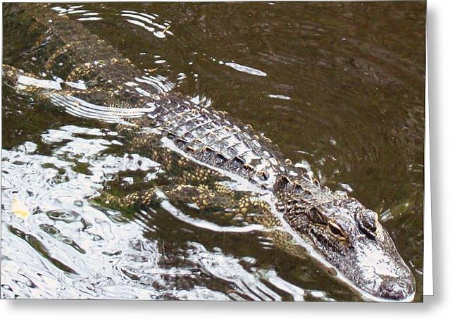 Florida Gators Pyrography Greeting Cards - Gator in Waiting 2 Greeting Card by Van Ness