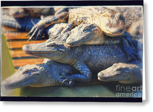 Florida Gators Greeting Cards - Gator Pals Greeting Card by Carol Groenen