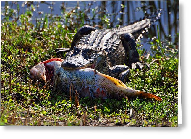 Florida Gators Mixed Media Greeting Cards - Gator snack  Greeting Card by Davids Digits