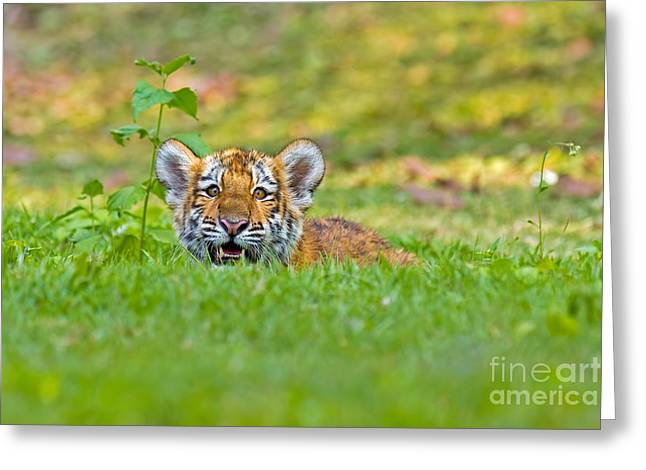 Gauging The Distance Greeting Card by Ashley Vincent
