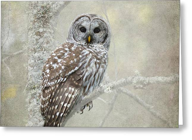 Gaurdian of the Woods Greeting Card by Reflective Moments  Photography and Digital Art Images
