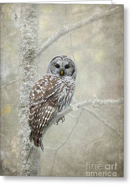 Owl Photographs Greeting Cards - Gaurdian of the Woods Greeting Card by Reflective Moment Photography And Digital Art Images