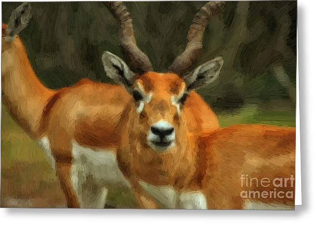 Talking Animals Mixed Media Greeting Cards - Gazelles - Painting Greeting Card by Michael Braham