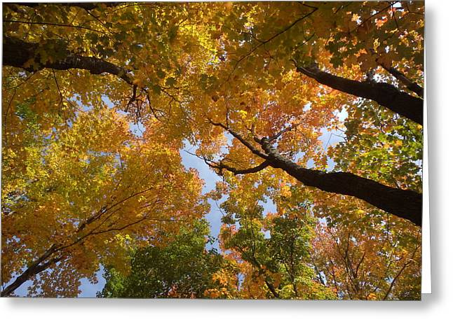 Outlook Greeting Cards - Gazing into Autumn Skies Greeting Card by James Peterson