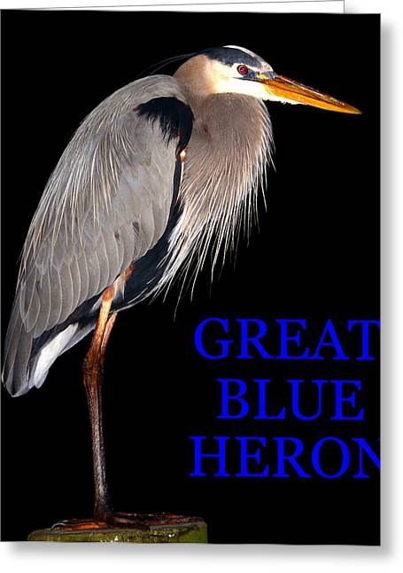 Wildlife  Poster Greeting Cards - GBH bird educational work A Greeting Card by David Lee Thompson
