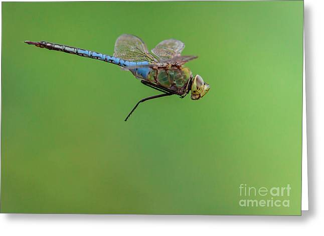 Dragonflies Greeting Cards - Gear Malfunction Greeting Card by Robert Frederick