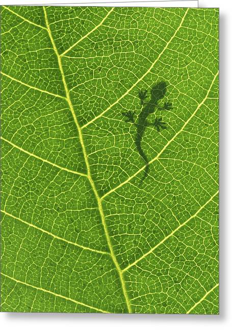 Climbing Greeting Cards - Gecko Greeting Card by Aged Pixel