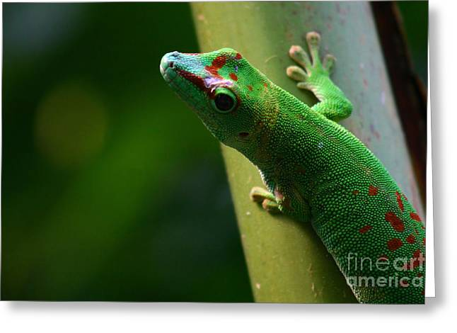 Gecco Greeting Cards - Gecko Greeting Card by Karin Brockmueller