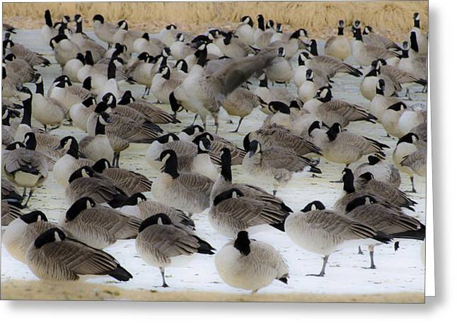 Canadian Geese Greeting Cards - Geese Abstract 2 Greeting Card by Dave Dilli