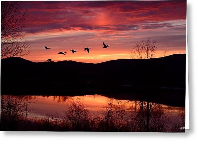 Geese Pyrography Greeting Cards - Geese after Sunset Greeting Card by Harry Moulton