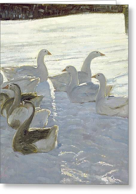 Gaggle Greeting Cards - Geese Against The Light Oil On Canvas Greeting Card by Timothy Easton