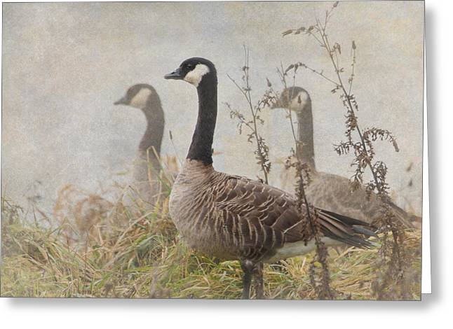 Wildlife Refuge. Greeting Cards - Geese Greeting Card by Angie Vogel