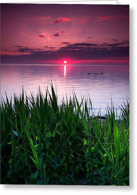 Sony Greeting Cards - Geese at Sunrise Greeting Card by Cale Best