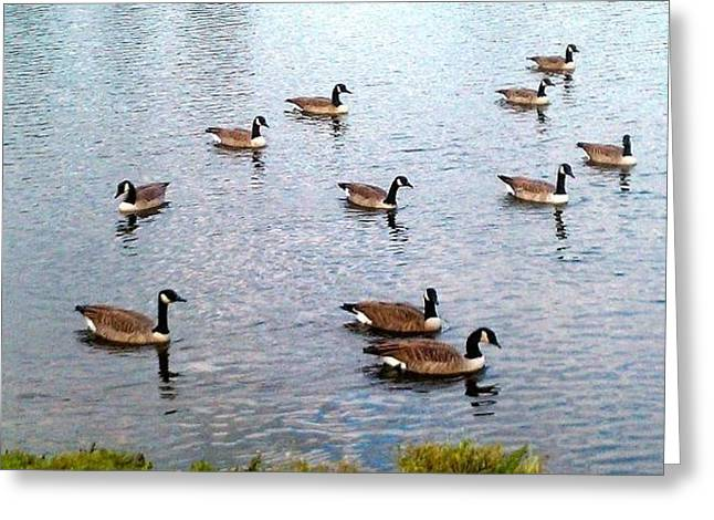 Geese Pyrography Greeting Cards - Geese Greeting Card by Denise Raley