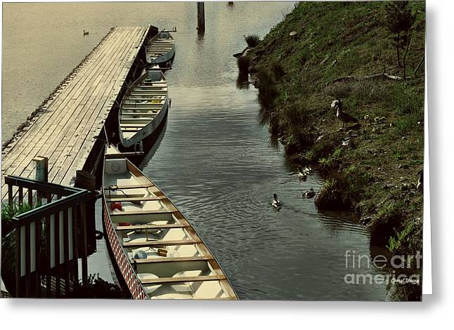 Lake Union Greeting Cards - Geese Ducks and Canoes Greeting Card by Cheryl Young