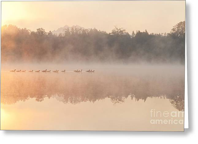 Geese In Sunrise And Fog, Lake Cassidy Greeting Card by Jim Corwin