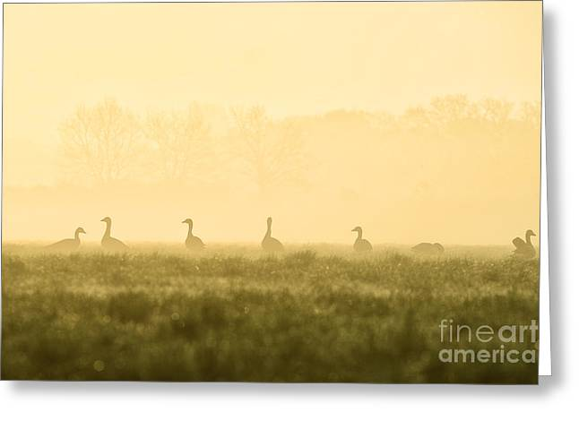 Geese Silhouette Greeting Cards - Geese Greeting Card by Jana Behr