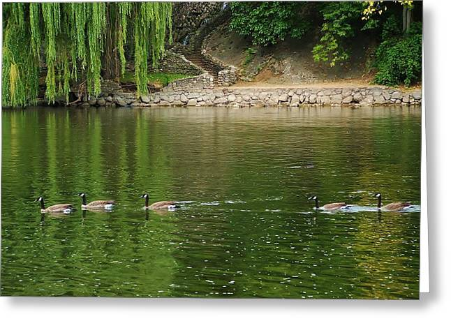 Water Fowl Greeting Cards - Geese on the St. Joseph River in Indiana Greeting Card by Rory Cubel