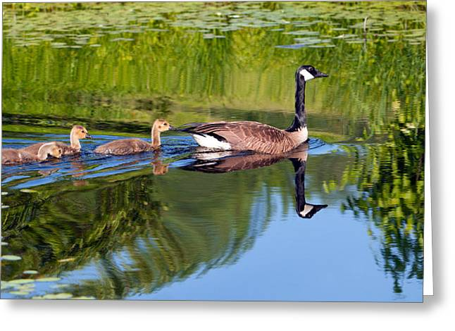 Mother Goose Greeting Cards - Geese Ripples Greeting Card by Shelle Ettelson