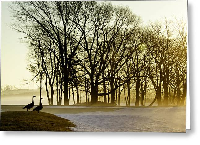 Geese Watching the Sunrise Greeting Card by Vicki Jauron
