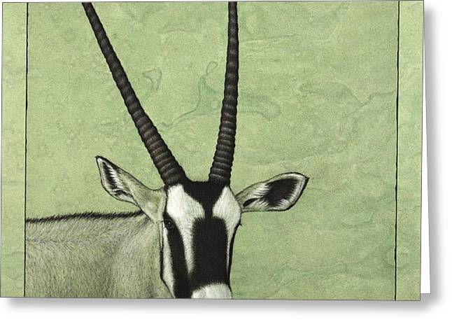 Gemsbok Greeting Card by James W Johnson
