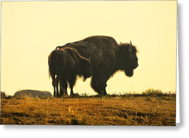 Yellowstone Wildlife Greeting Cards - Generations Greeting Card by Greg Norrell