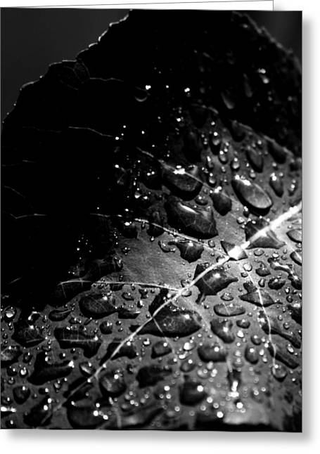 Rain Drop Greeting Cards - Generous Hands Greeting Card by Jerry Cordeiro