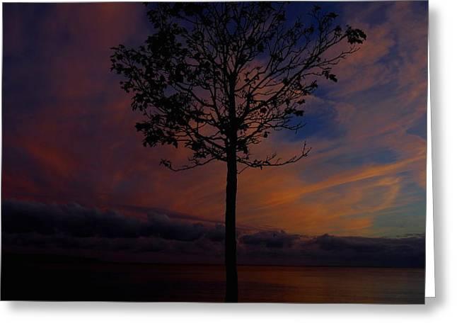 Stephen Melcher Greeting Cards - Genesis Tree Greeting Card by Stephen Melcher