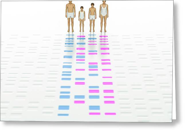 Genetic Relationships Of A Family Greeting Card by David Parker