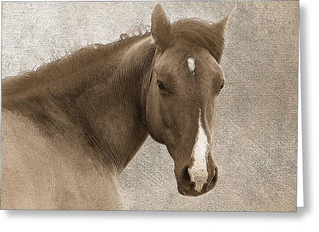 Quarter Horse Digital Art Greeting Cards - Gentle Devotion Greeting Card by Betty LaRue