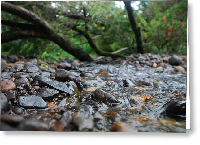 Babbling Greeting Cards - Gentle Flow Greeting Card by Paul  Farrant