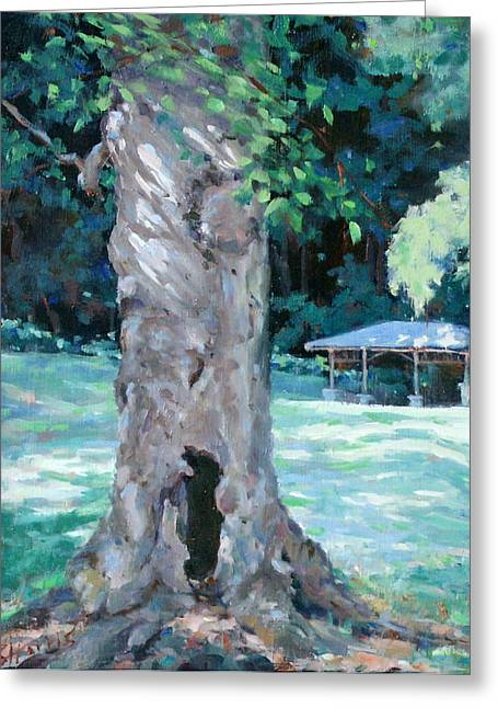 Percy Warner Park Greeting Cards - Gentle Giant Greeting Card by Sandra Harris