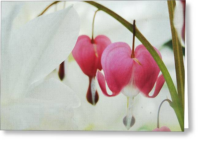 Gentle Heart Greeting Card by Ginger Denning