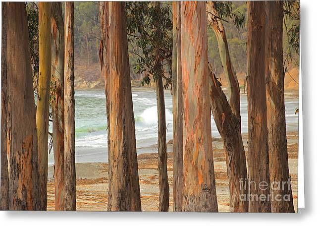 Cambria Greeting Cards - Gentle Morning Song Greeting Card by Kris Hiemstra