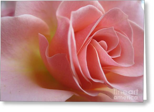 Texture Floral Drawings Greeting Cards - Gentle Pink Rose Greeting Card by Tara  Shalton